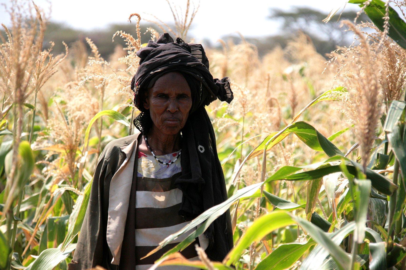Woman in a field of maize in Kenya Isiolo, Merti (Biliko)