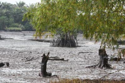 Oil spill at Goi Creek, Nigeria, August 2010